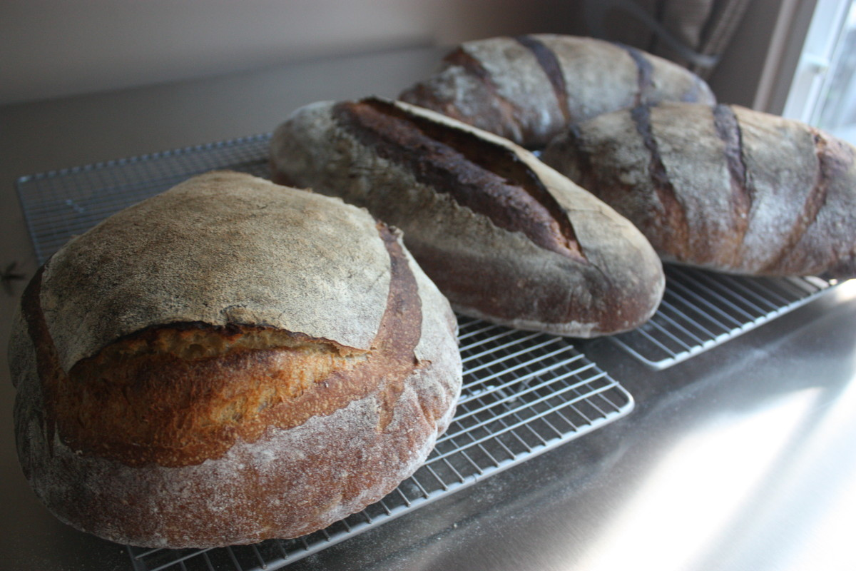 April 22 sourdoughs